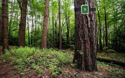 Treevoice e tecnologia LoraWan per l'ambiente