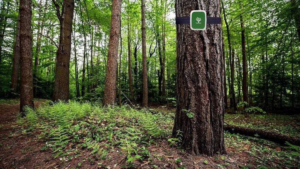 Treevoice-Lorawan-ambiente-alberi